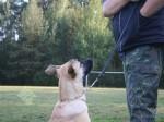 Schule für Hunde Hundeschule am Himmelreich
