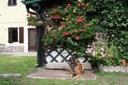 Casa Nina in Mezzolago am Ledrosee